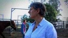 A husband for horses