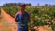 James Jarrett – Tyrrell's Wines Employee