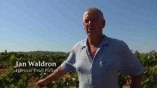 Ian Waldron – Harvest Trail Picker