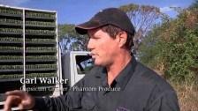 Carl Walker – Capsicum Grower, Phantom Produce (3)