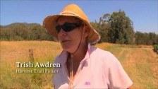 Trish Awdren – Harvest Trail Picker