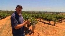 Andrew Pengilly Talks Grapes