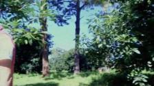 Bonnie Walker – Trees