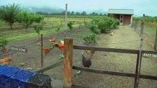 Margan Estate Wines, Hunter Valley