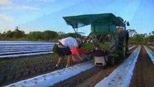 Harvest Trail TV celebrates 2012 as The Australian Year of the Farmer