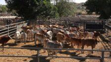 Dairy Farming at Hunter River High